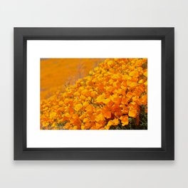 Golden Meadow of California Poppies in Bloom by Reay of Light Photography Framed Art Print
