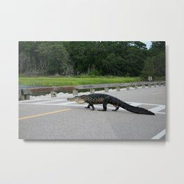 Alligator Right Of Way Metal Print