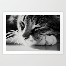 Portrait of a cat in black and white Art Print