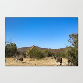 Two Zebras, One Giraffe Canvas Print