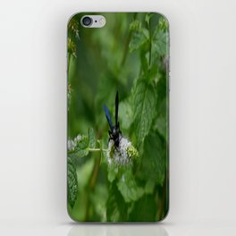 Scolia dubia a.k.a The Blue Winged Wasp iPhone Skin