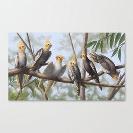Cockatools Canvas Print