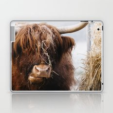 Highland cow feeding on straw on a frosty winters morning. Norfolk, UK. Laptop & iPad Skin