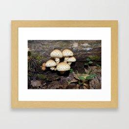 Honey Mushroom Cluster Framed Art Print