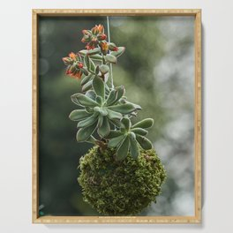 decorative succulent plant hanging in the garden Serving Tray