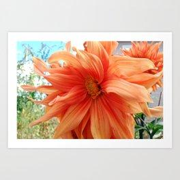 Late Bloom Art Print