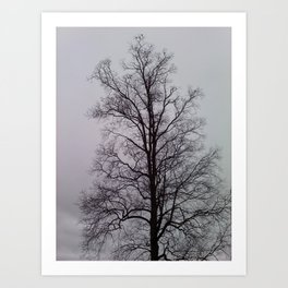 Lung tree with Birds Art Print