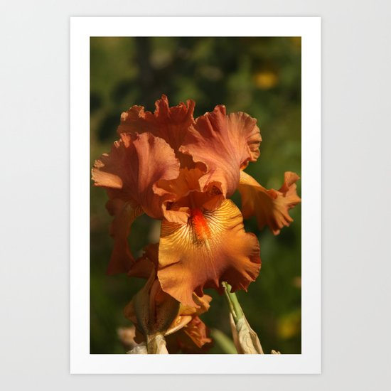 Iris - Golden Art Print