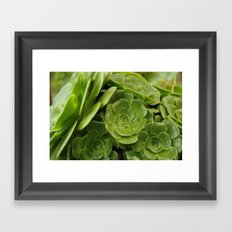 Aeonium plant 1838 Framed Art Print