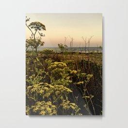 Blooms in the Salt Flats in Big Sur Metal Print