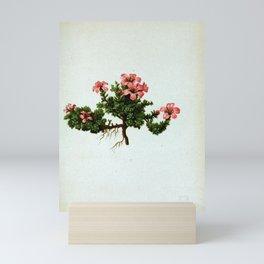 Flower saxifraga oppositifolia18 Mini Art Print
