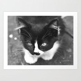Neko Cat Photography Print Art Print