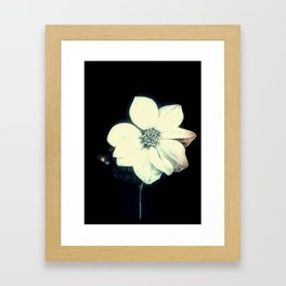 White Dahlia, Christmas Star Framed Art Print