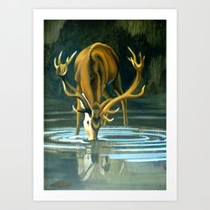Red Stag Drinking Art Print