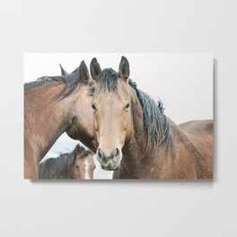 Rugged Country Horses Metal Print