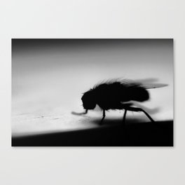 Housefly Canvas Print
