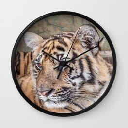 Tiger, Medium Indo-China Wall Clock