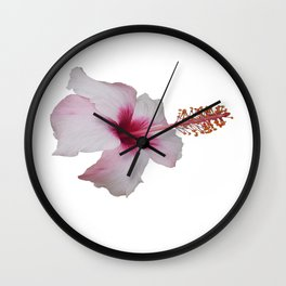Pale Pink Hibiscus Tropical Flower No Text Wall Clock