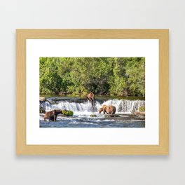 Grizzly bears fishing Framed Art Print