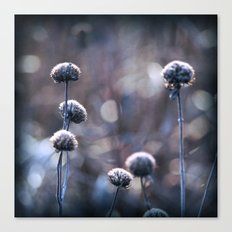Copper Field Evening Frost Canvas Print