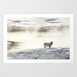 Yellowstone National Park - Wolf and Hot Spring Art Print