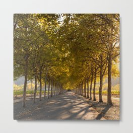 Napa Valley Tree Lined Path, Fall Colors, Autumn, Sunshine, California Photography, Thanksgiving Art Metal Print