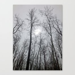 Bare Trees  series (2) Canvas Print