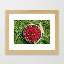 Sour cherrys fruit Framed Art Print
