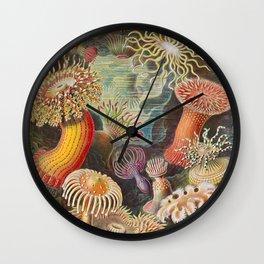 Ernst Haeckel Sea Anemones Vintage Illustration Wall Clock