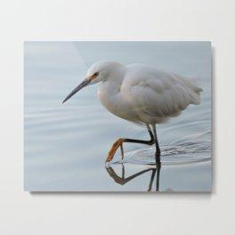 Snowy Egret High Stepping Metal Print