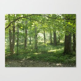 Looking into the Forest Canvas Print