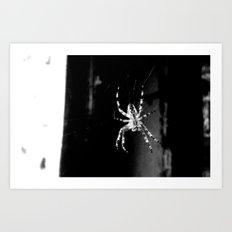 Spider in Amsterdam Art Print