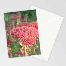 Morning Sunlight Stationery Cards
