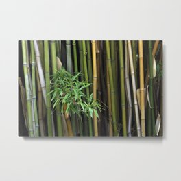Bamboo Branch Canes Background Exotic Plants Metal Print