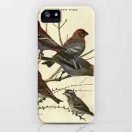 PINE GROSBEAK, PURPLE FINCH14 iPhone Case