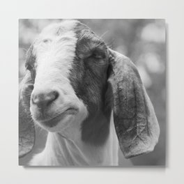 Goat Photography | Farm Animals | Nature Metal Print