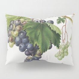 Grape from Ischia (Viti vinifera vegetatione insana) from Pomona Italiana (1817 - 1839) by Giorgio G Pillow Sham