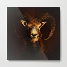 Beautiful Mouflon on Dark Background #decor #society6 #buyart Metal Print