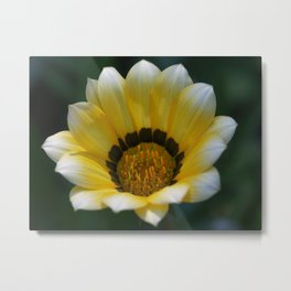 Yellow Gazania Metal Print