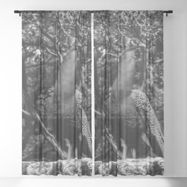 Majestic - Black and White - Graphic 1 Sheer Curtain