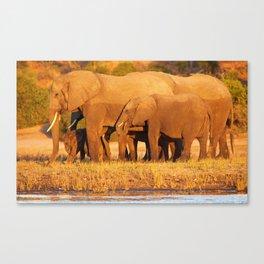 Elephants in the evening light - Africa wildlife Canvas Print