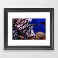 Lion fish Framed Art Print