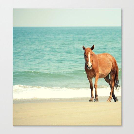 Wild Mustang of Carova, NC Canvas Print