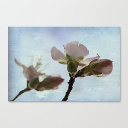 spring bloosoms Canvas Print