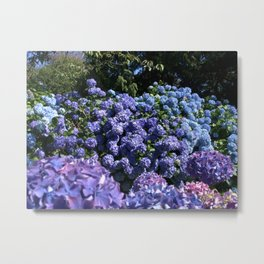 SEA OF BLUE HYDRANGEAS Metal Print