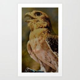 arabic falcon Art Print