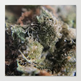 Super Skunk Canvas Print