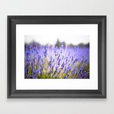 Lavenders Framed Art Print