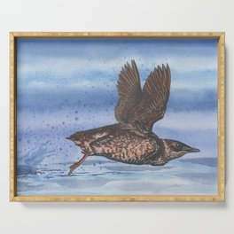 Marbled Murrelet take off Serving Tray