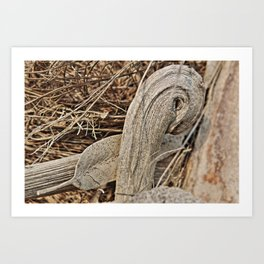 Still life in palm bark Art Print